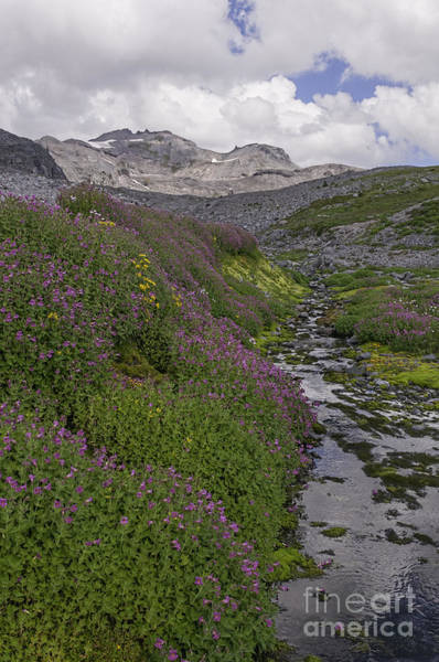 Photograph - Wildflowers At Rainier by Sharon Seaward