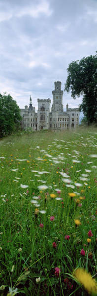 Casbah Photograph - Wildflowers In A Field With A Castle by Panoramic Images