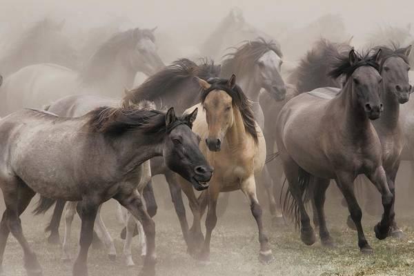 Wall Art - Photograph - Wildpferde by Dieter Uhlig