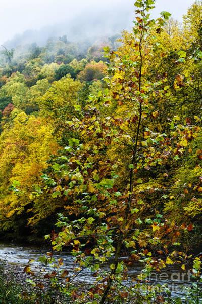Photograph - Williams River Autumn Mist by Thomas R Fletcher