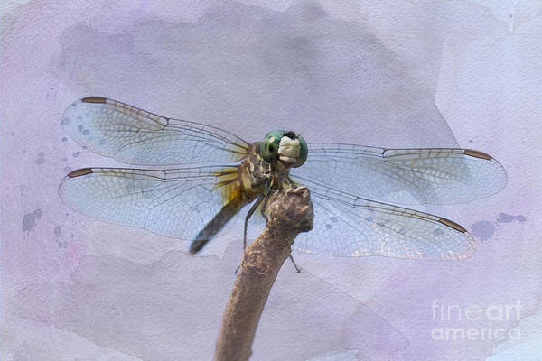 Dasher Photograph - Wings Of Beauty by Betty LaRue