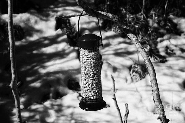 Wildbird Photograph - Winter Bird Peanut Food In A Plastic Feeder In A Garden In The Uk by Joe Fox