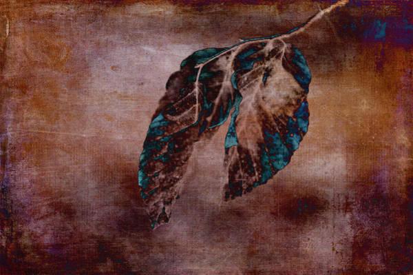 Photograph - Winter Blues by Randi Grace Nilsberg