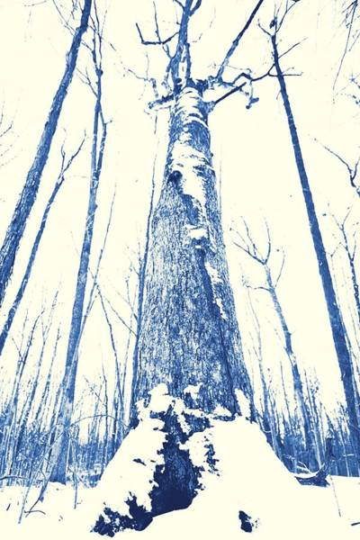 Photograph - Winter Forest by Dan Sproul