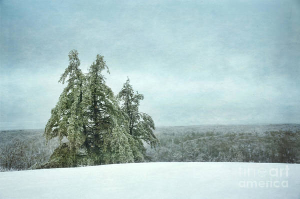 Wall Art - Photograph - Winter by HD Connelly