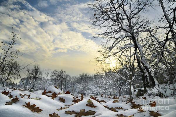 Photograph - Winter Landscape by Jelena Jovanovic