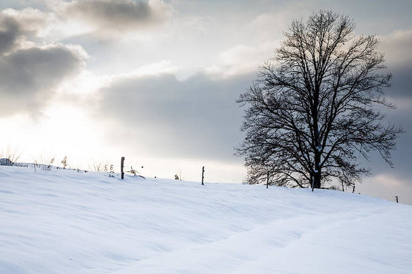 Wall Art - Photograph - Winter Landscapes by Ian Middleton