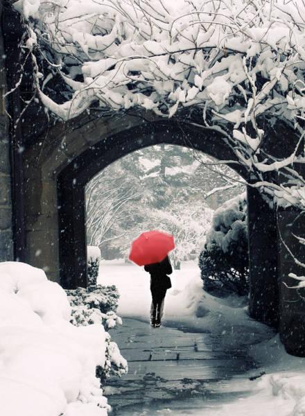 Vining Photograph - Winter Passage by Jessica Jenney