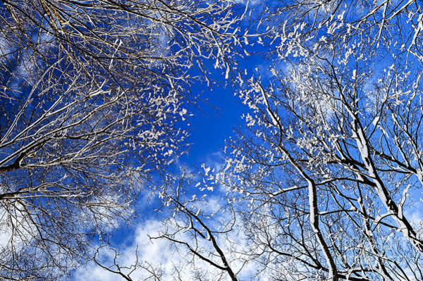 Tree Top Photograph - Winter Trees And Blue Sky by Elena Elisseeva