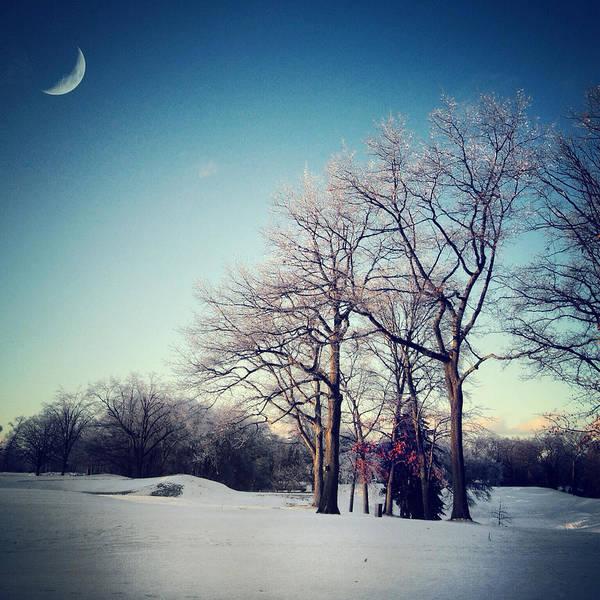 Photograph - Winter's Eden by Natasha Marco