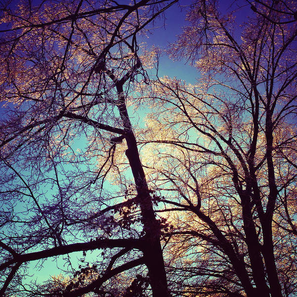 Photograph - Winter's Glow by Natasha Marco