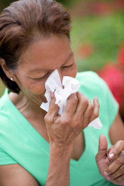 Fever Photograph - Woman Sneezing by Ian Hooton/science Photo Library