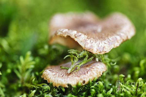 Mushrooms Photograph - Wood Mushrooms by Elena Elisseeva