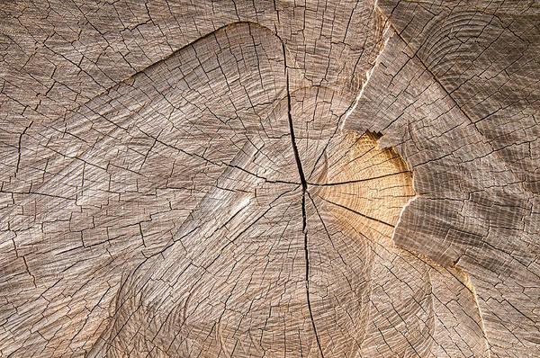 Photograph - Wood Texture by Matthias Hauser