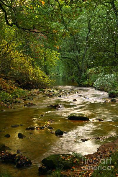 Woodland Stream In Autumn Art Print