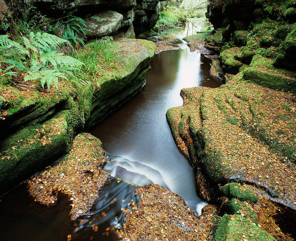 Gully Photograph - Woodland Waterfall by Simon Fraser/science Photo Library