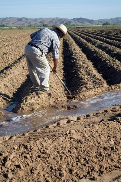 Yuma Photograph - Worker Digging Irrigation Channels by Jim West