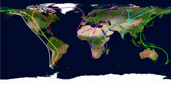 Migration Photograph - Worldwide Bird Migration Routes by Science Photo Library