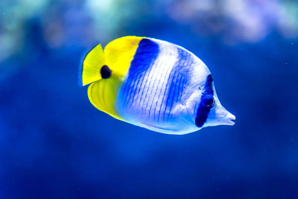 Floating Museum Photograph - Yellow Fish by Jijo George