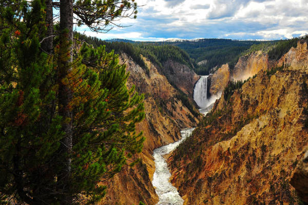 Photograph - Yellowstone Falls by Harry Spitz