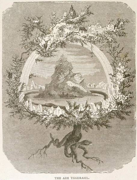 Folklore Drawing - Yggdrasil (yggdrasill), The Sacred Ash by Mary Evans Picture Library
