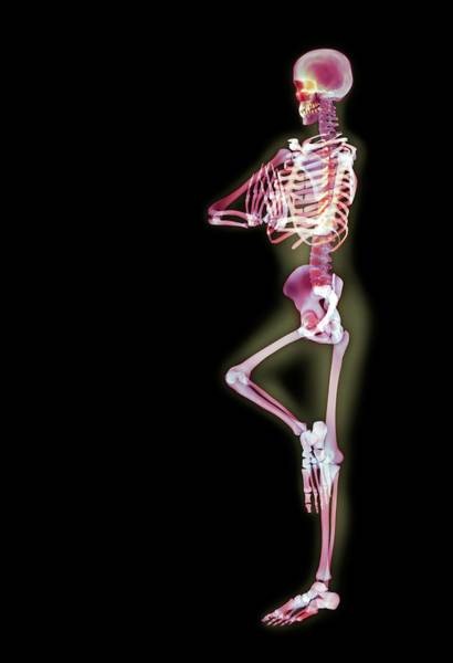Anatomical Position Wall Art - Photograph - Yoga Position by Gustoimages/science Photo Library