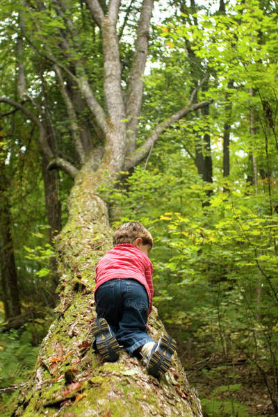Ossipee Wall Art - Photograph - Young Boy Playing In Forest In Rural by Justin Bailie