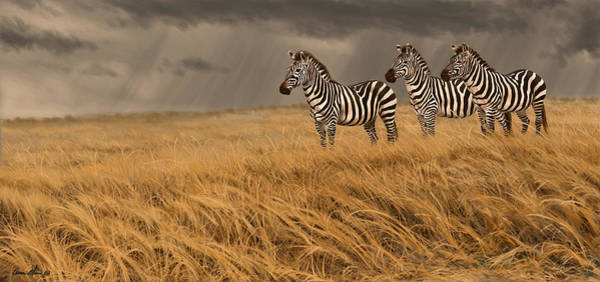 Wall Art - Digital Art - Zebra Trio by Aaron Blaise