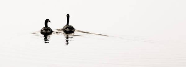 Photograph - Zen Geese by Bob Coates
