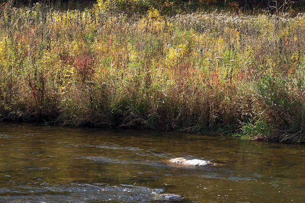 Wall Art - Mixed Media - Canadian Fall Season Colors Oakville Ontario Lyon Ridge Trail River Stream Picknic Spot Bird Watch C by Navin Joshi