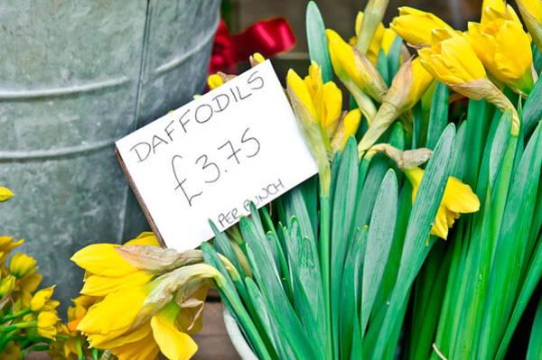 Metal Bucket Photograph - Daffodils by Tom Gowanlock