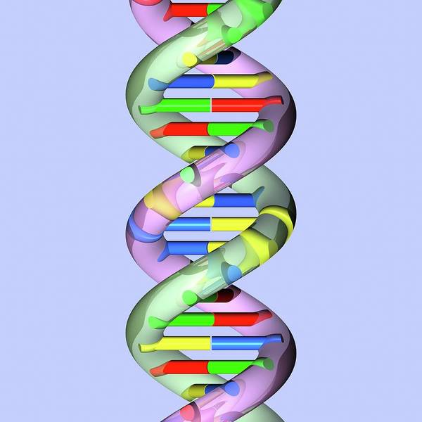 Genetic Information Wall Art - Photograph - Dna Molecule by Russell Kightley