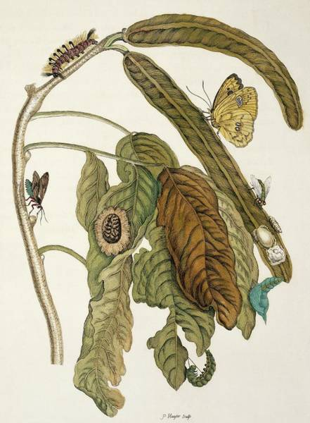 Wall Art - Photograph - Insects Of Surinam by Natural History Museum, London/science Photo Library