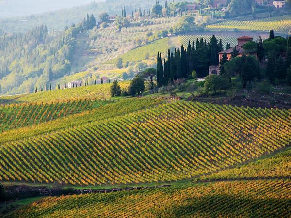 Wall Art - Photograph - Italy, Tuscany, Chianti, Autumn by Terry Eggers