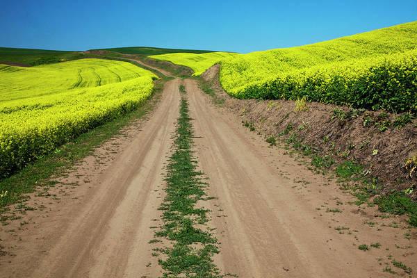 Back Road Photograph - North America, Usa, Washington, Palouse by Terry Eggers
