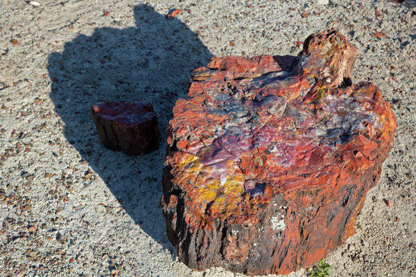Petrified Forest National Park Photograph - Petrified Forest by Jim West/science Photo Library