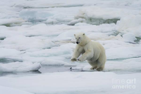 Wall Art - Photograph - Polar Bear by John Shaw