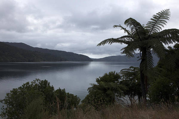 Queen Charlotte Sound Wall Art - Photograph - Queen Charlotte Sound by Karen Cowled