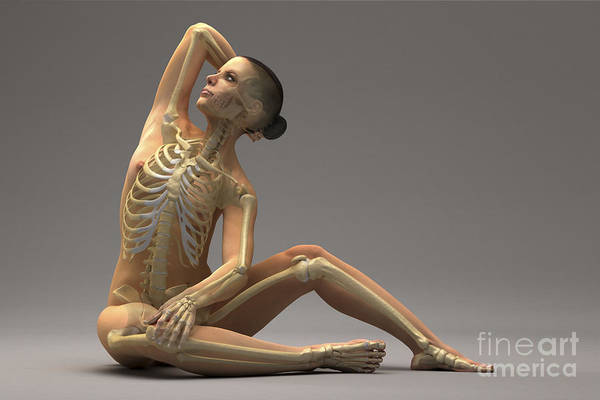 Photograph - The Skeletal System Female by Science Picture Co
