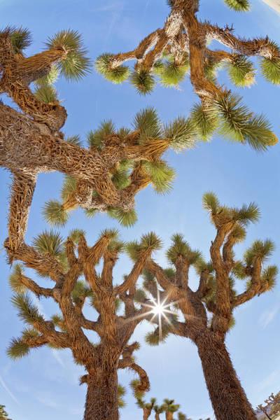Don Photograph - Usa, California, Joshua Tree National by Jaynes Gallery