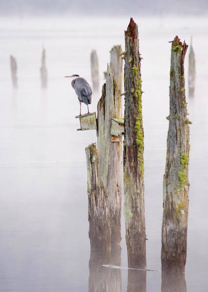 Ardea Photograph - Canada, British Columbia, Vancouver by Kevin Oke