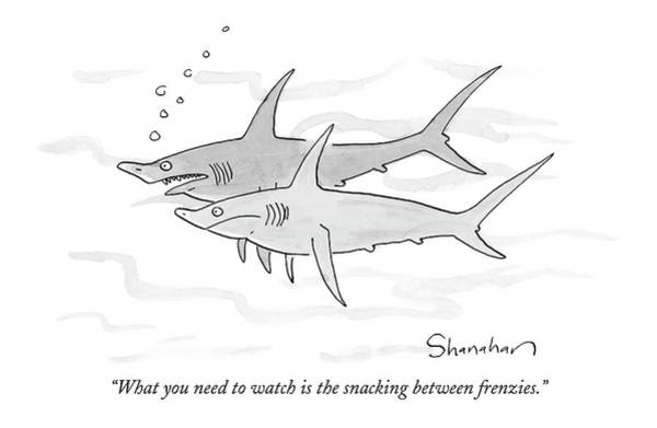 Sharks Drawing - What You Need To Watch Is The Snacking by Danny Shanahan