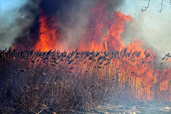 Native Plant Photograph - Controlled Fire by Jim West