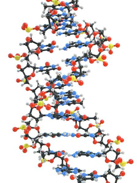 Genetic Material Photograph - Dna Molecule by Maurizio De Angelis