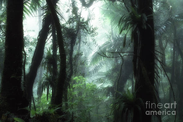 Photograph - El Yunque National Forest by Thomas R Fletcher