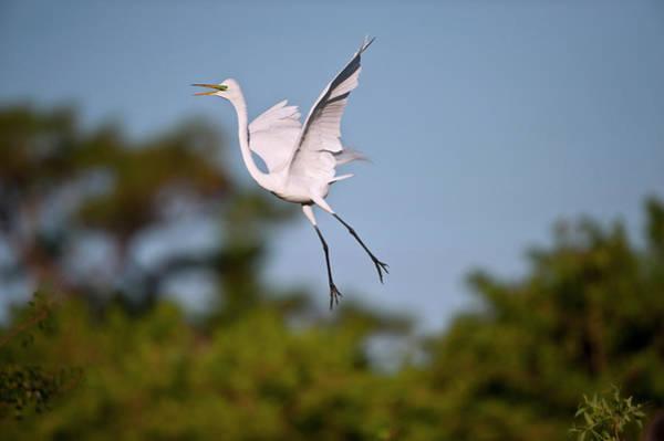Squawk Photograph - Florida, Venice, Audubon Sanctuary by Bernard Friel