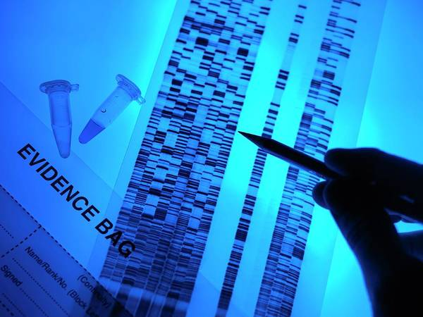Genetic Code Photograph - Forensic Evidence by Tek Image/science Photo Library