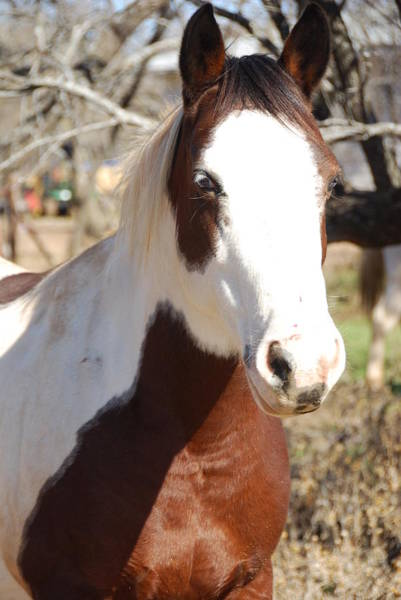 Wall Art - Photograph - Paint Mare by Thea Wolff