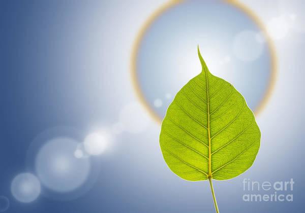 Natural Mixed Media - Pho Or Bodhi by Atiketta Sangasaeng