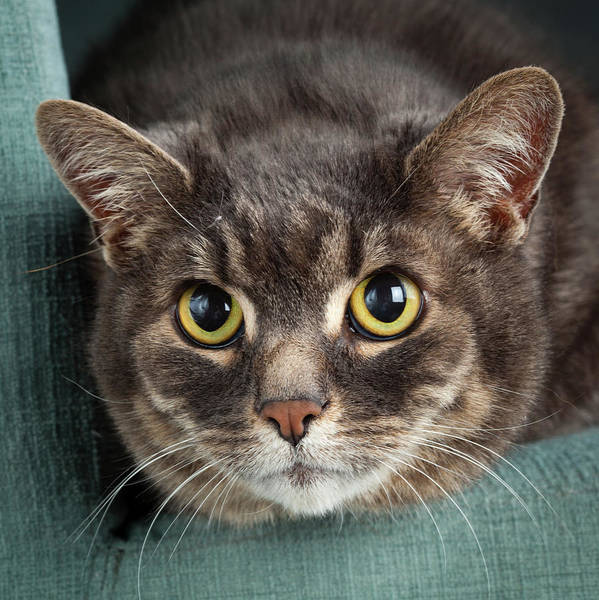 Wall Art - Photograph - Portrait Of A Cat On A Chair by Animal Images